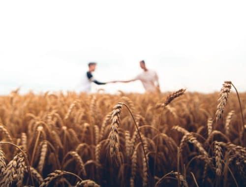 web marketing per aziende agricole